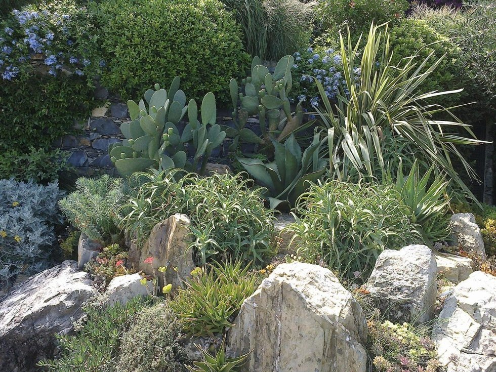 aiuola mista piante grasse e pietre
