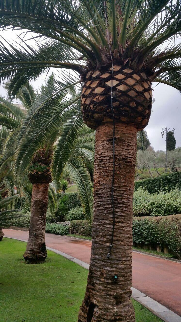 Palm Treatment