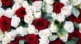 rose rosse, rose bianche, arte funeraria