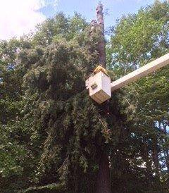 Tree Service York, ME