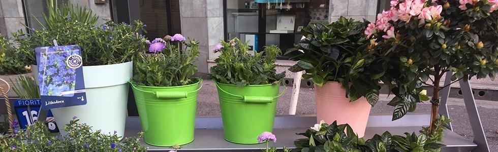 negozio vendita fiori lecco