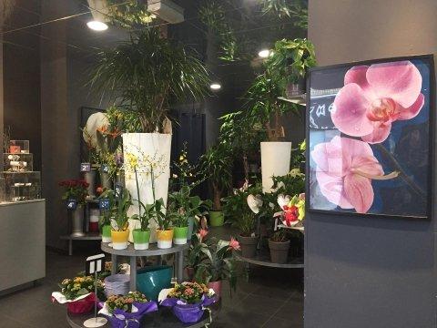 vendita piante e fiori lecco, negozio di fiori a lecco, Fiorito a Lecco