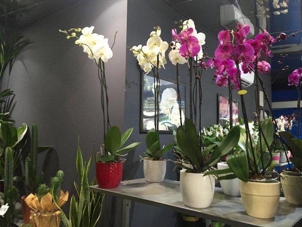 orchidee in vendita