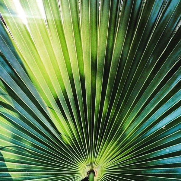 Boutique Hotel Tulum Mexico - Garden
