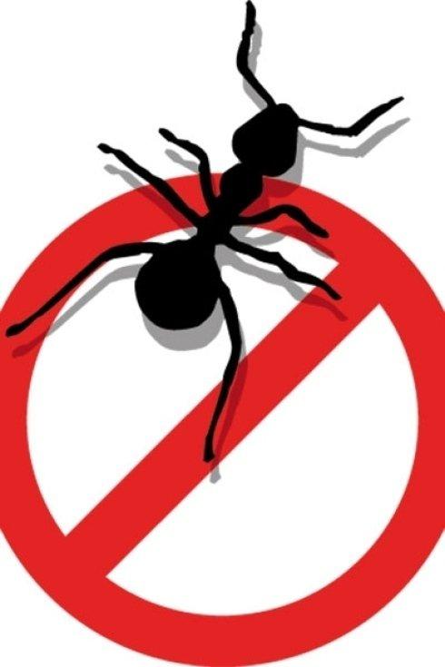 Disinfestazione dalle formiche