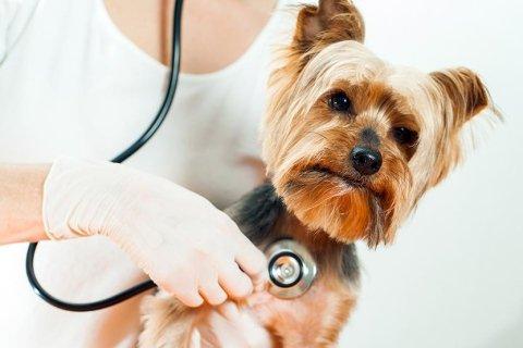 cardiologia per cani e gatti