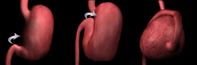 stomaco in corso di GDV