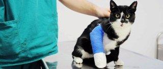 visite specialistiche veterinarie