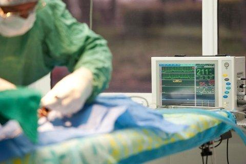 anestesia per animali