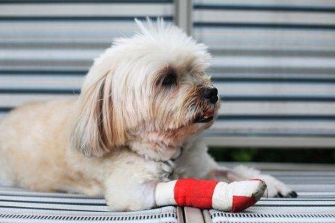 ortopedia cane