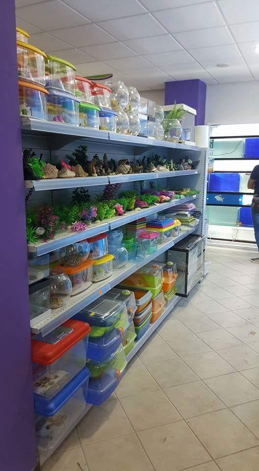 reparto pesci con scaffali pieni di contenitori in vetro o plastica per pesci