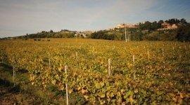 aziende vinicole, vini romagnoli, vino alla spina