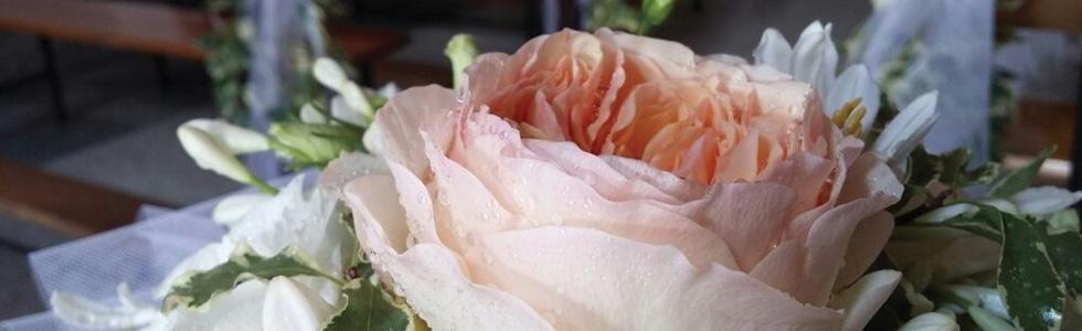fiorista idini
