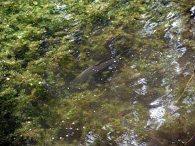 Caravan campsite - Norwich - Marsh Farm Caravan Site and Fishing Park - Fishing Lake