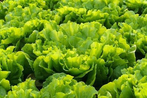 verdure fapanni
