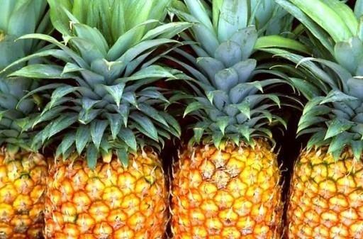 greengrocer's Fapanni pineapple
