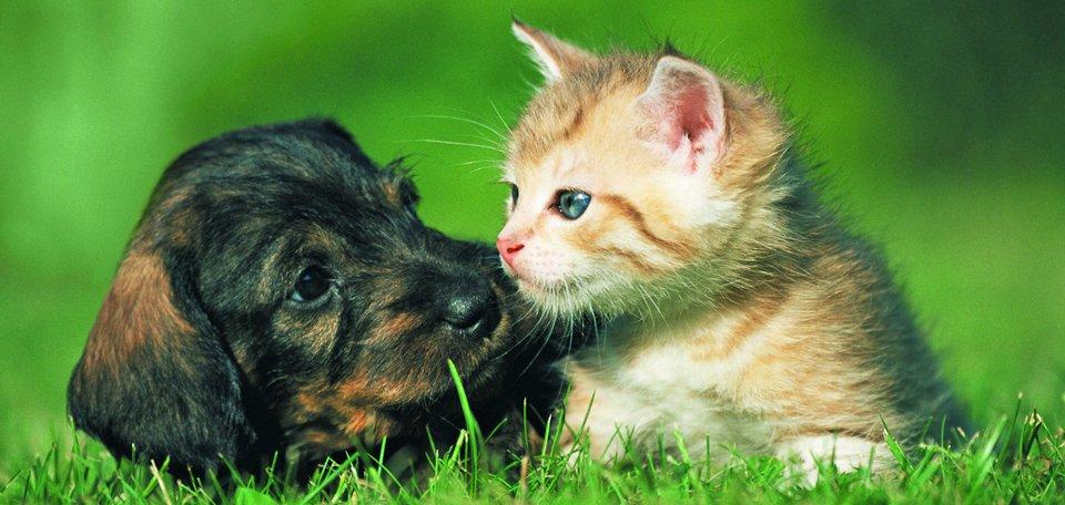Animal Adoptions