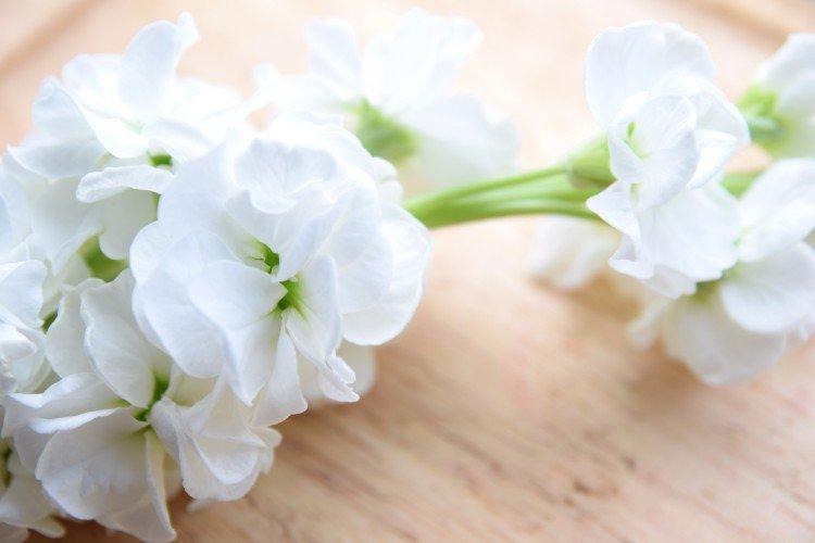 Semplici gladioli bianchi