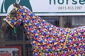 nerang stockfeed nice decorated horse