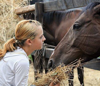 nerang stockfeed woman feeding the cow
