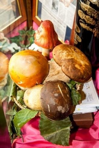 funghi porcini freschi a Cortona