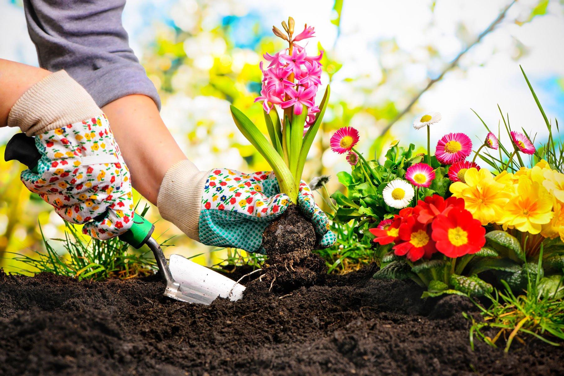 Un giardiniere prepara il terreno per piantare una piante con fiori