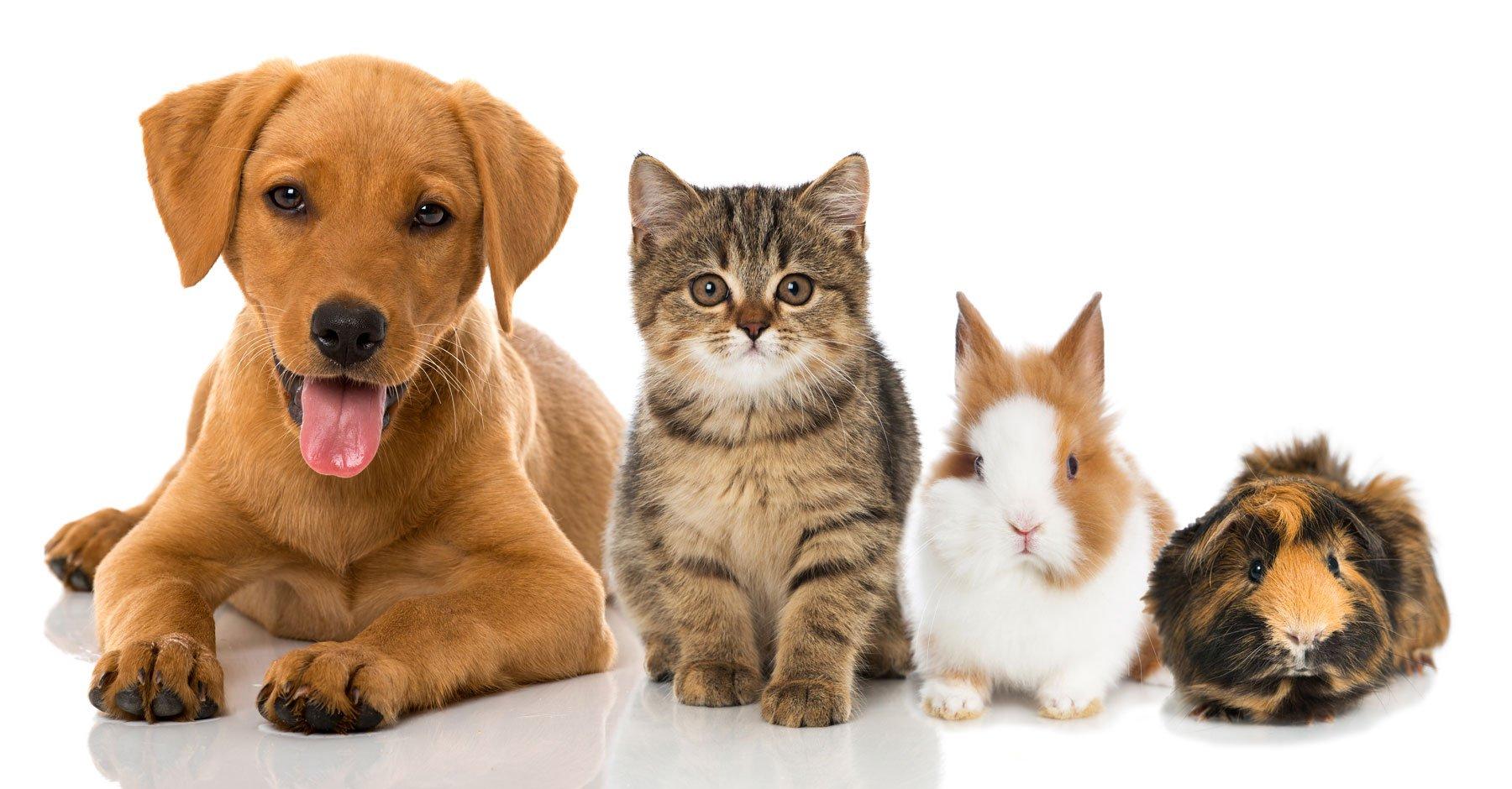 4 cuccioli: un cane, un gatto, un coniglio e un porcellino d'India
