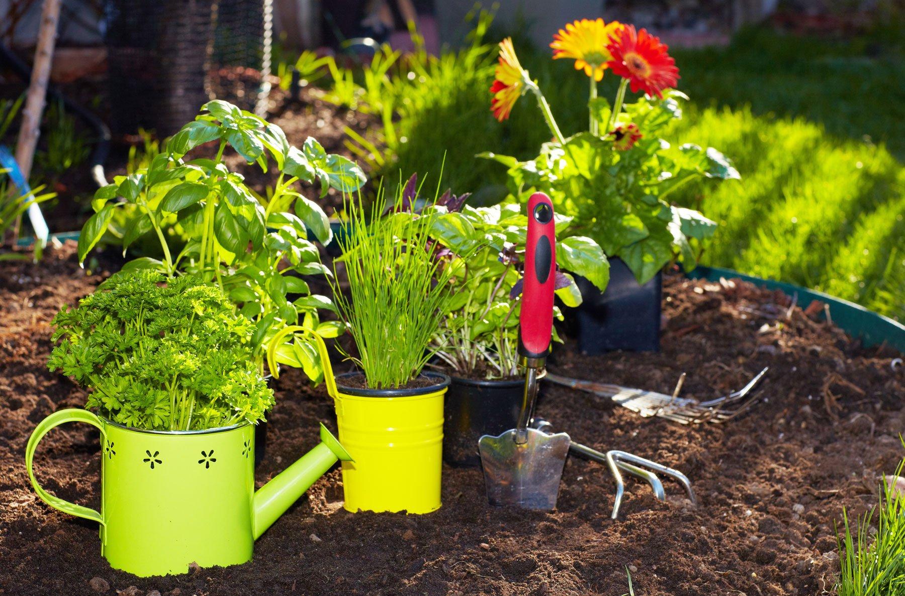 Un giardinetto con delle piante e degli strumenti da fai da te