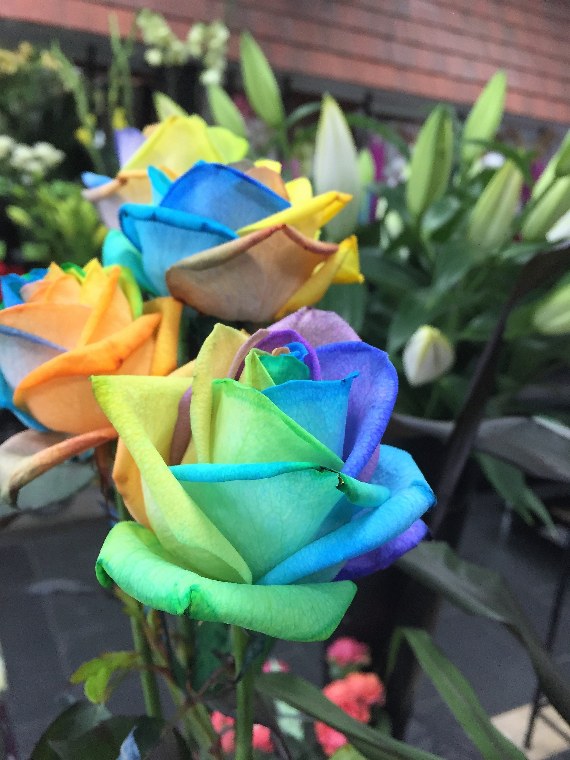 rose shape flowers