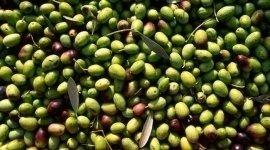lavorazione artigianale olive