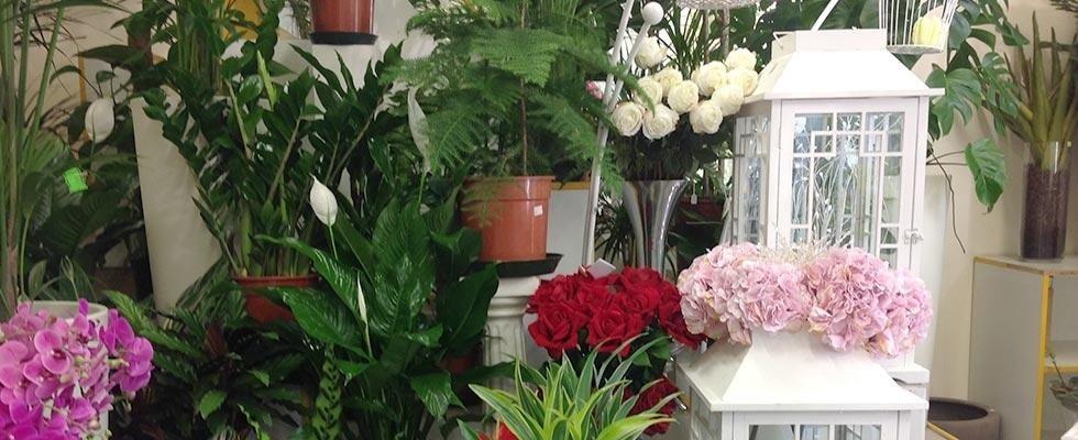 Vendita di piante e fiori - Ikebana - Foligno