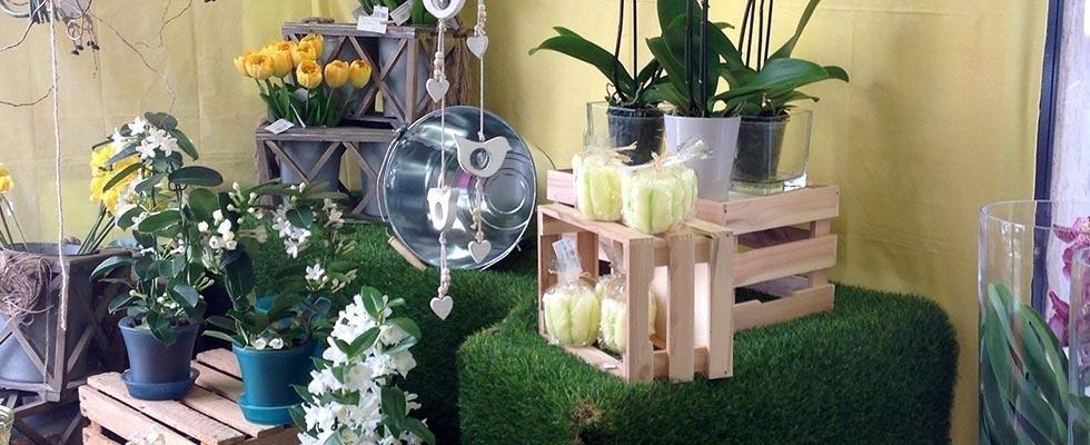 Piante per interni - Ikebana