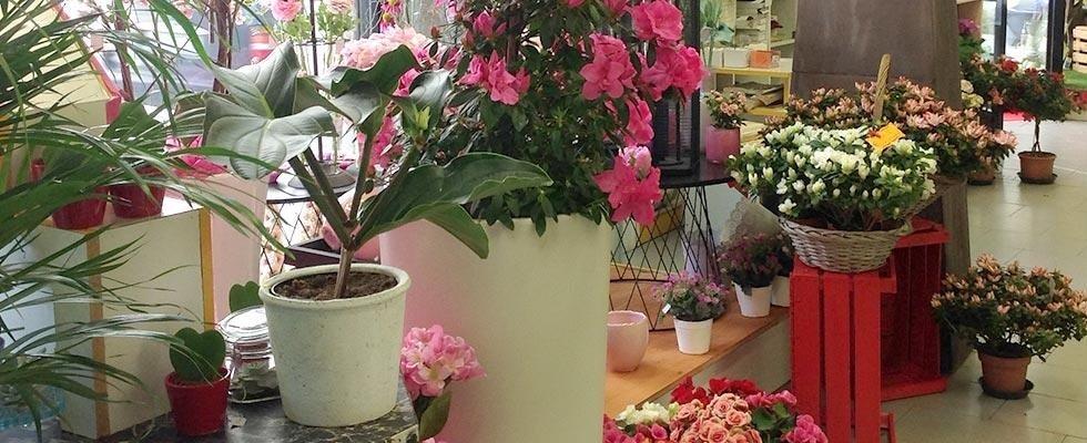Ikebana Piante e Fiori - Foligno