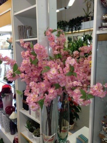 Alcune piante esposte nel negozio