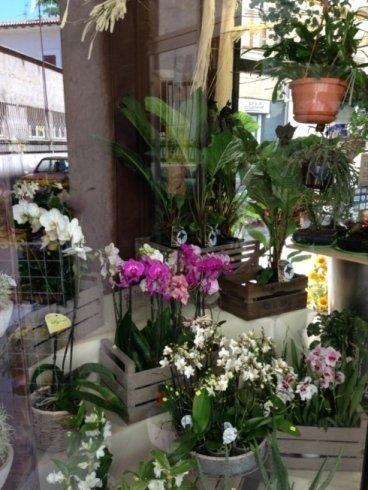 Esposizione fiori nel negozio