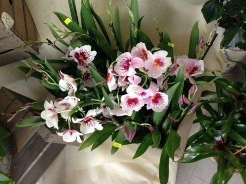 Esposizione fiori ikebana