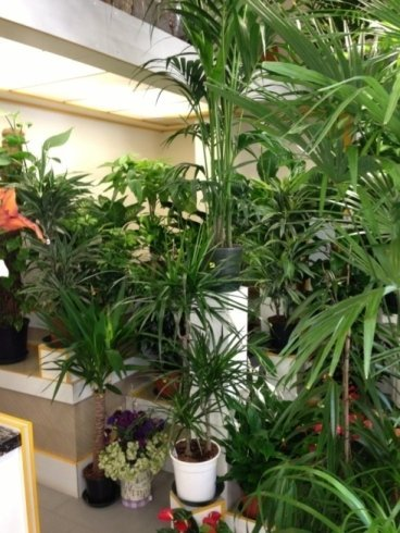 Fioraio ikebana foligno 2