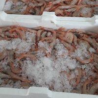 cucina ar marinaro 40