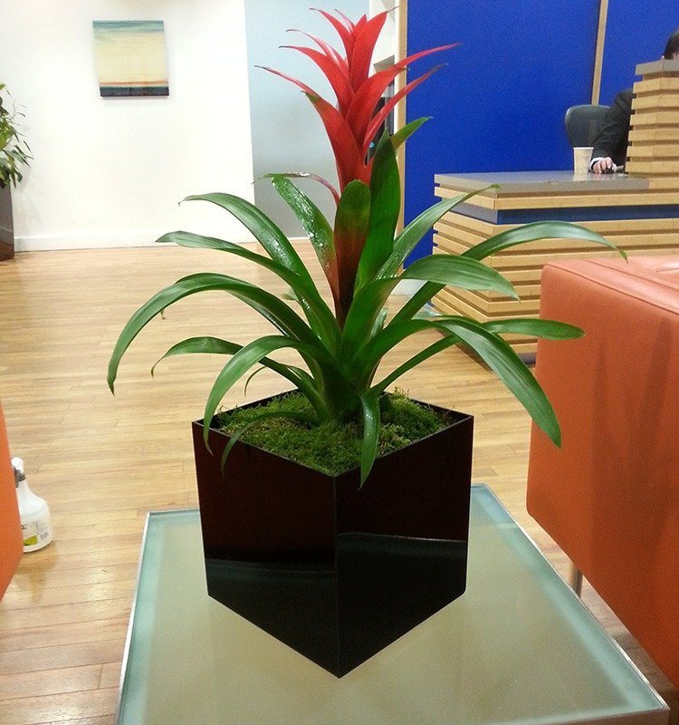 Beautiful planters for offices in Fulham