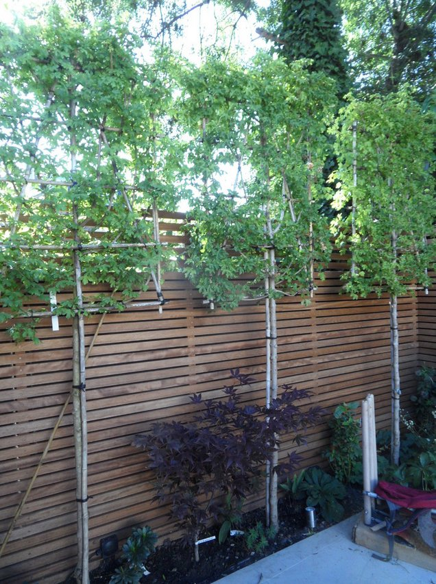 Beautiful garden in Balham