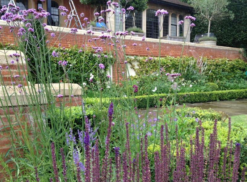 Beautiful planting in North London garden