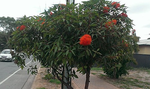 red flowers on green tree