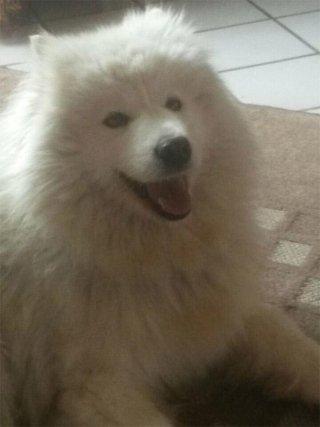 cure veterinarie per cani