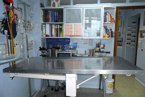 medico veterinario