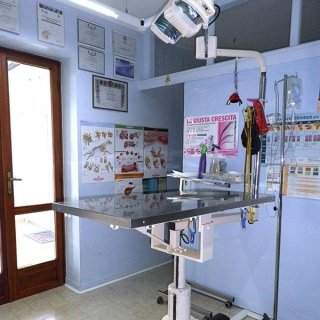 visite mediche cani
