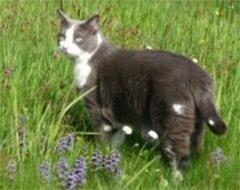 cure veterinarie per gatti