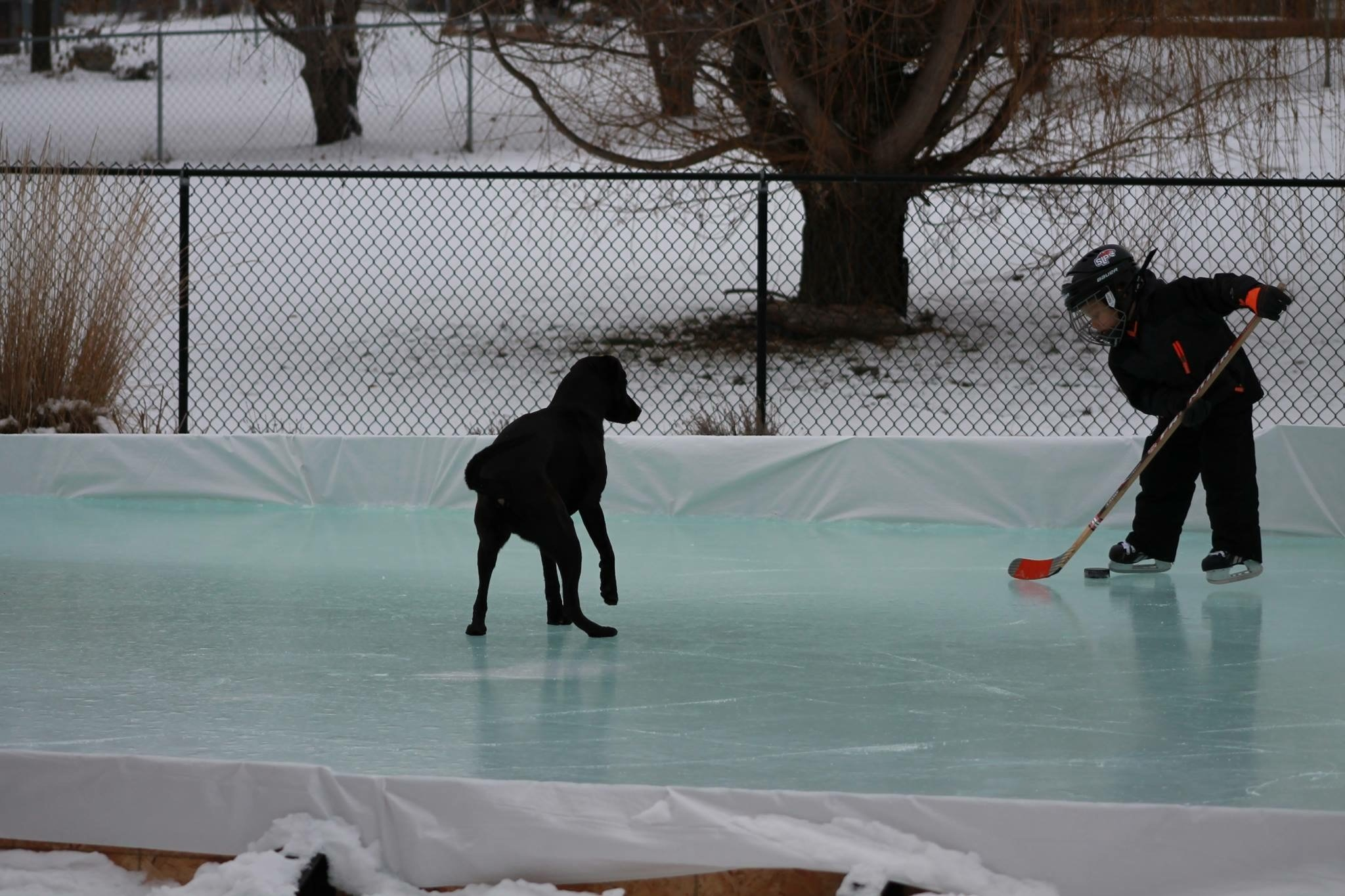 outdoor ice rinks wilton westport darien greenwich ct