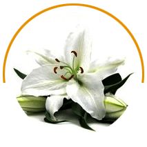 Image of a white flower