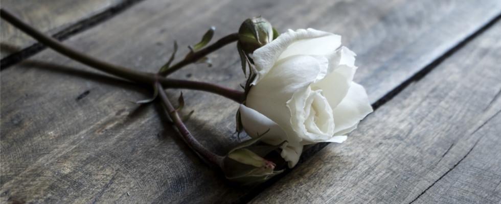 impresa funebre l'antica rosa
