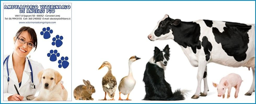 cliniche veterinarie, assistenza animali 24 h, Cerveteri, Roma